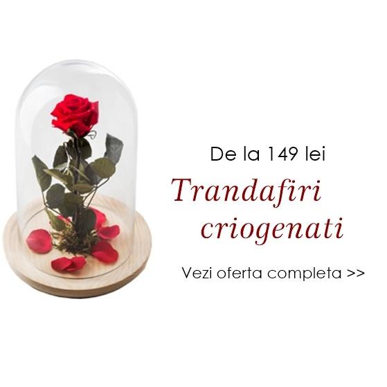 livrare flori bucuresti trandafiri criogenati