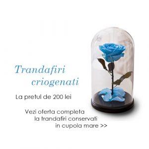trandafiri criogenati ieftini