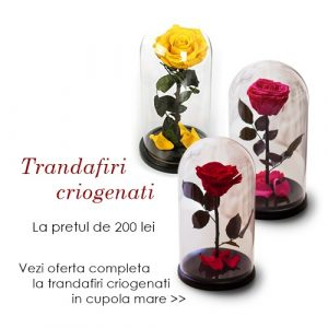 trandafiri criogenati pret