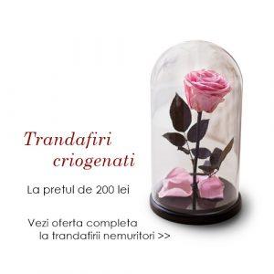 trandafiri criogenati nemuritori