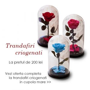 trandafiri criogenati bucuresti